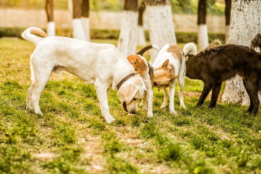 1 canine socialisation