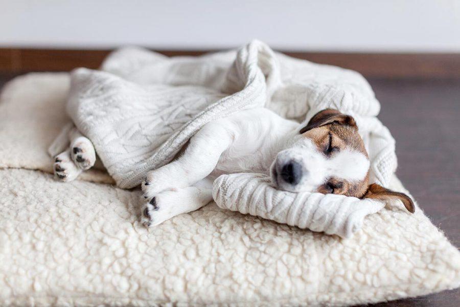 1 Cosa sognano i cani