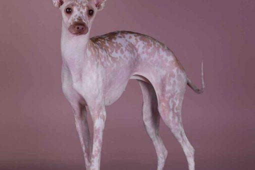 hund-ohne-violettes-fell